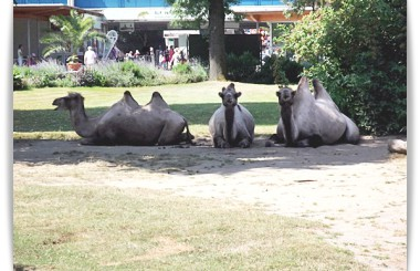 zoo inspirations